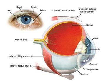 eye-diseases80