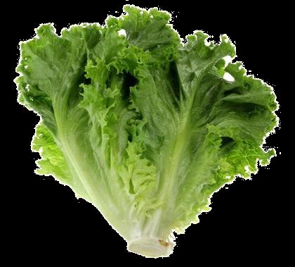 green_leaf_lettuce70_transp